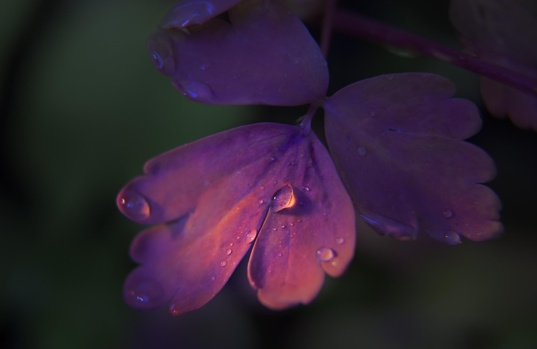 7-Fall-Dew