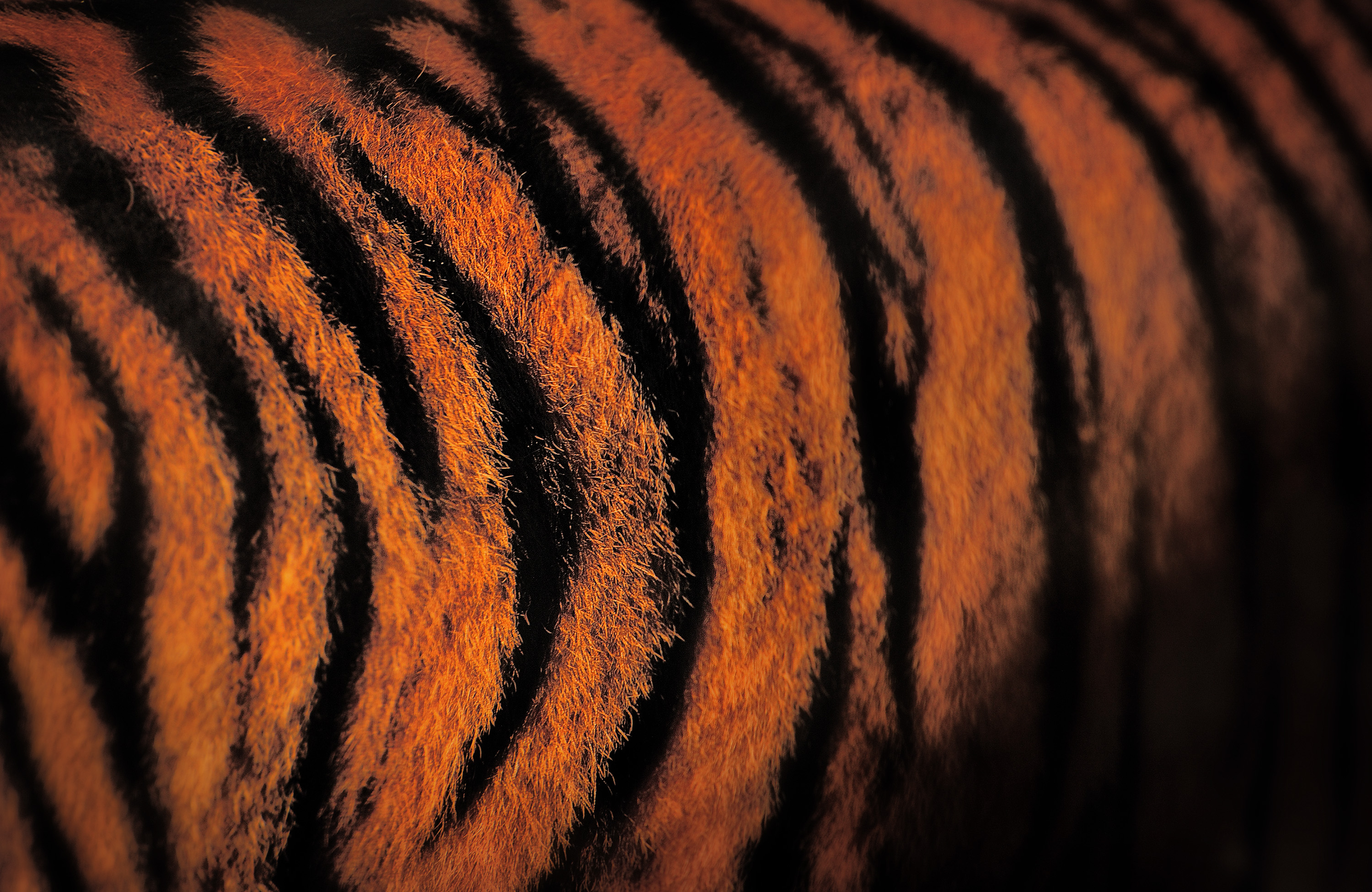 20-Tiger-Stripes