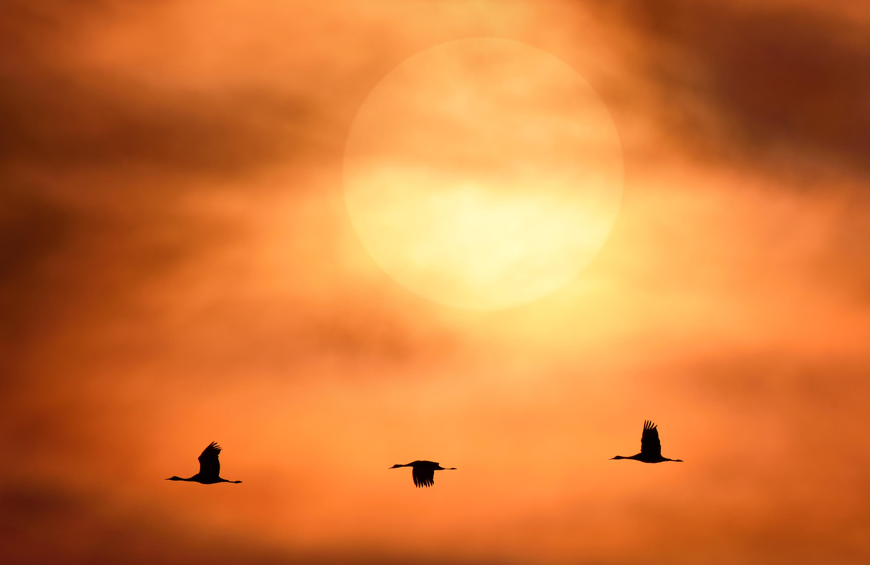 Sunlight-Flight-300dpi